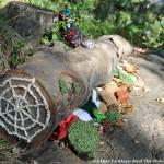 Beech Tree Project - Trish Mayo