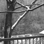 Beech Tree Winter 2013