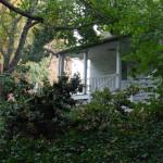 Broken tree limbs post Hurricane Sandy